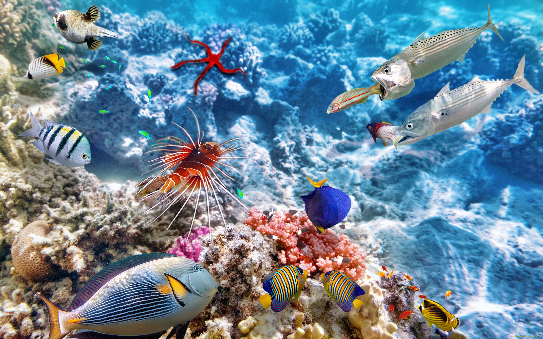 поездке картинки подводный мир океана всякого